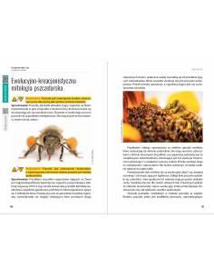 Paczka etykiet okrągłych na miód nawłociowy-nektarowy (100szt) - wzór E260