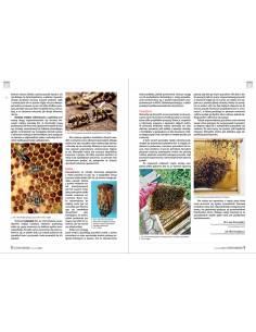 Paczka etykiet z kontretykietą na miód rzepakowy (100szt) - wzór E1204
